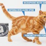 CIA-cat.jpg