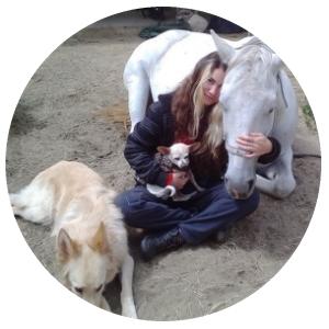 HorseRound2.jpg