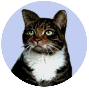 cat-round.jpg