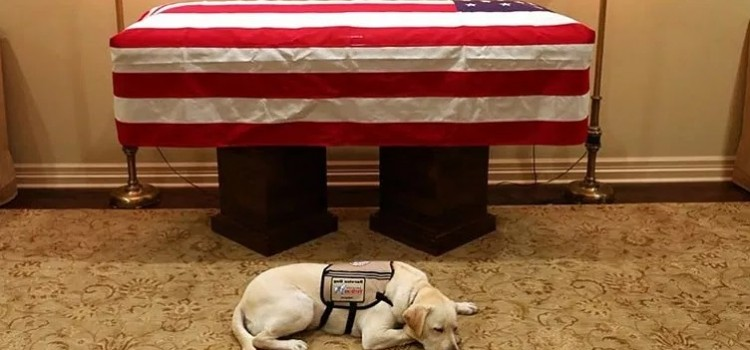 """What happens to Bush 41's service dog """"Sully"""" now that he is gone?"""